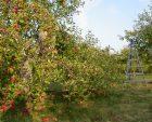 Jardin de pommes et d'argile – Le déambulatoire poétique